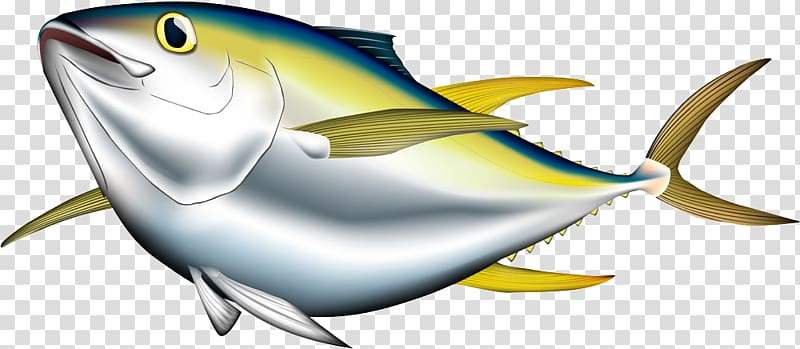 Gray and green salmon illustration, Bigeye tuna Albacore.