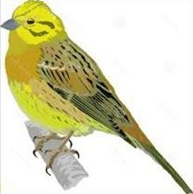 Free Yellowhammer Clipart.