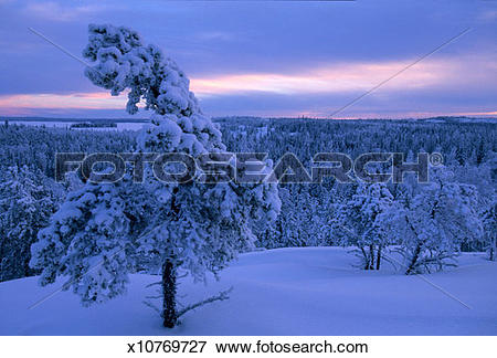 Picture of Canada, Northwest Territories, Yellowknife area, snow.