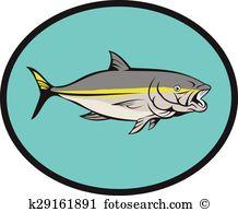Yellowtail Clip Art Illustrations. 4 yellowtail clipart EPS vector.