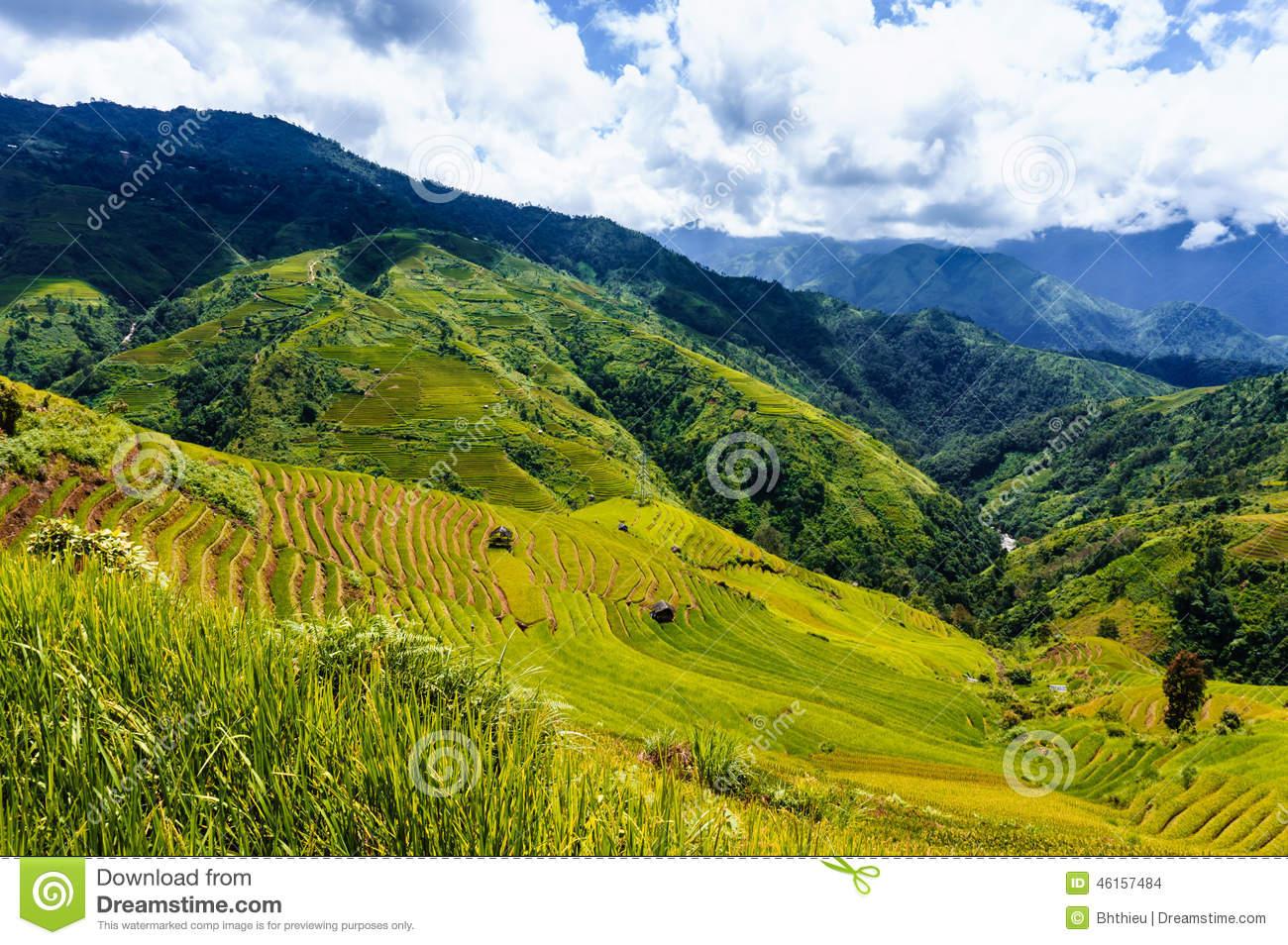 Vietnam Landscape: Rice Terraces At Mu Cang Chai, Yen Bai, Viet.