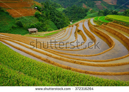 Agroculture Stock Photos, Royalty.