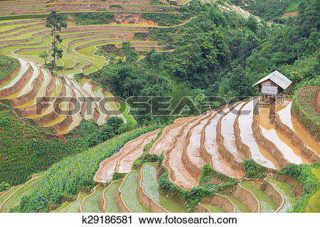 Stock Photography of rice k29186581.