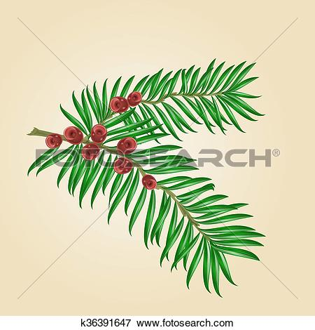 Clip Art of Yew branches with red berries vector.eps k36391647.