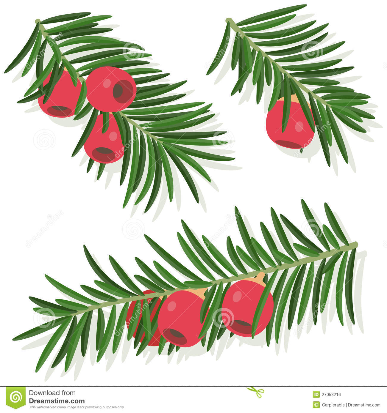 Yew Leaf Sprig Stock Illustrations.