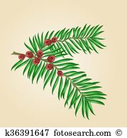 Yew tree Clip Art Royalty Free. 18 yew tree clipart vector EPS.
