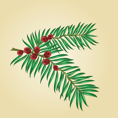 Yew tree clipart.