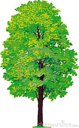 Yew Tree. Vector Stock Photos.