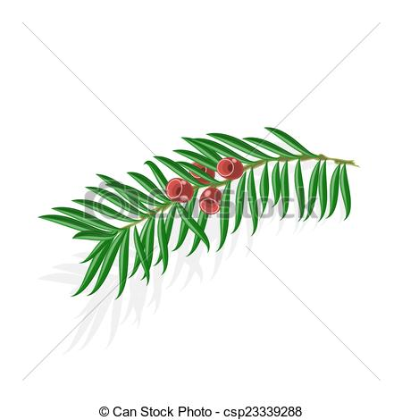 Yew tree Stock Illustrations. 29 Yew tree clip art images and.