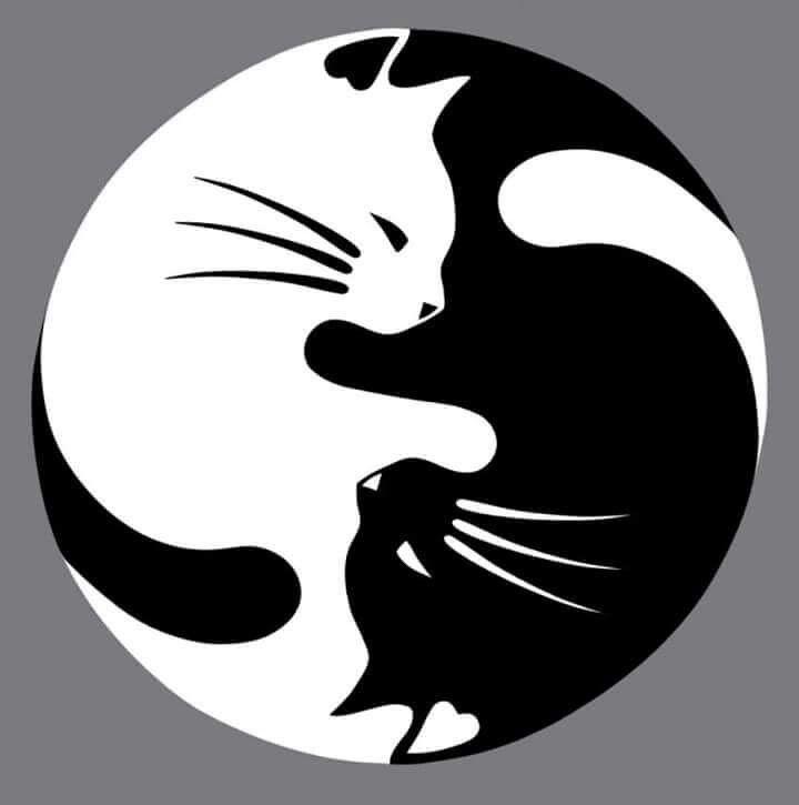 Cat ying yang.