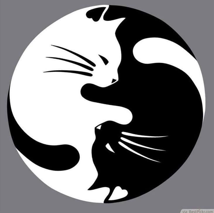 Pin by Carolyn Berets on Great Kitties.