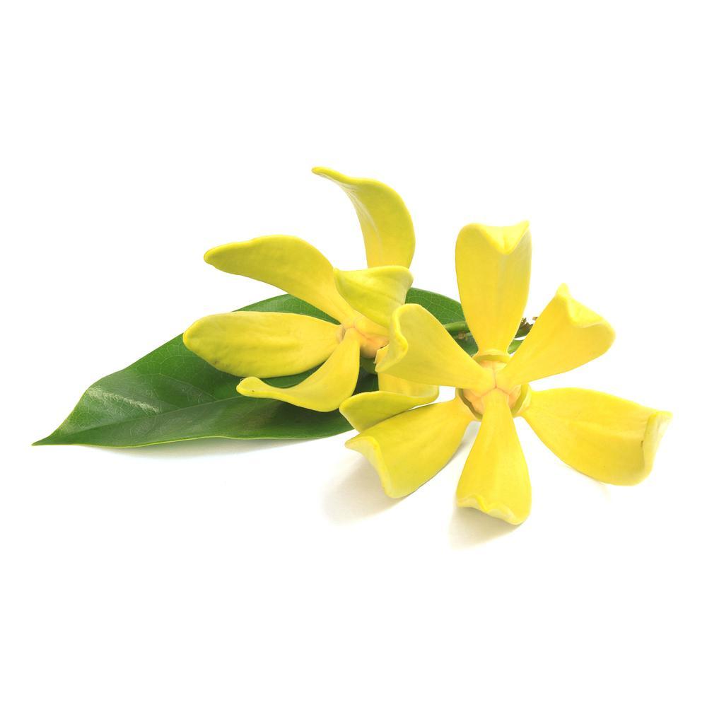 Ylang Ylang, Organic Essential Oil.
