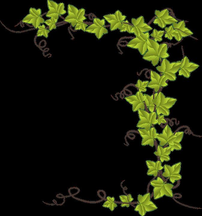 Grape Leaf Cliparts 22, Buy Clip Art.