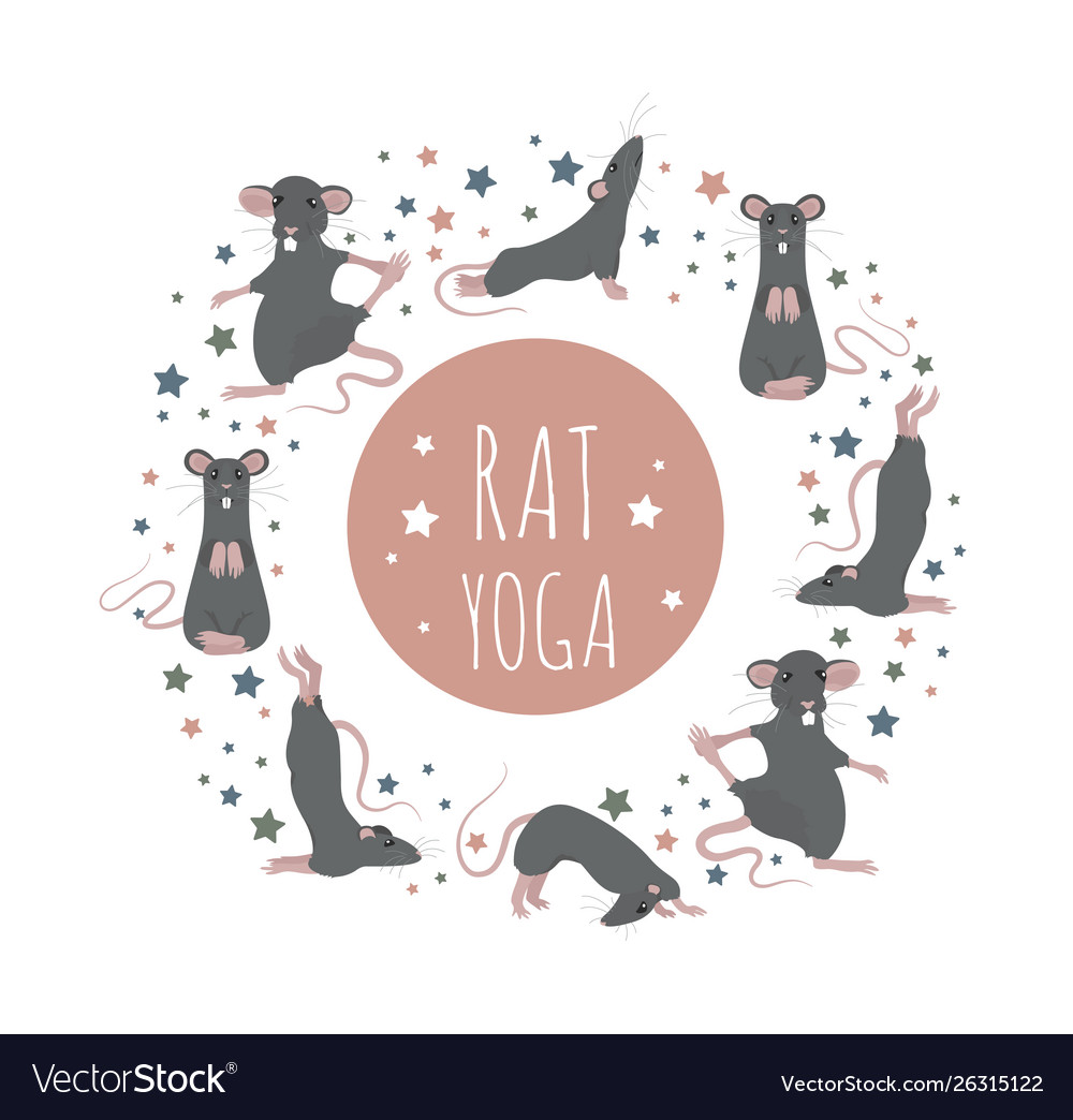 Rat yoga poses and exercises cute cartoon clipart.