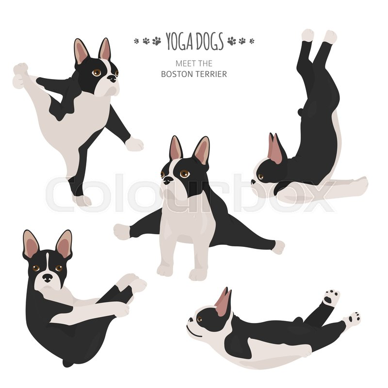 Yoga dogs poses and exercises. Boston.