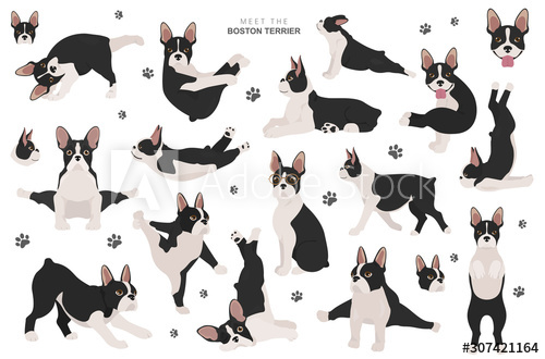 Boston terrier clipart. Dog healthy silhouette and yoga.