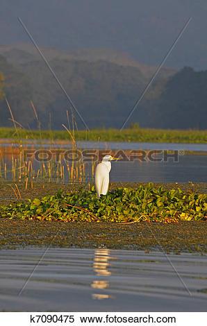 Stock Image of Lago Yojoa in Hoduras k7090475.