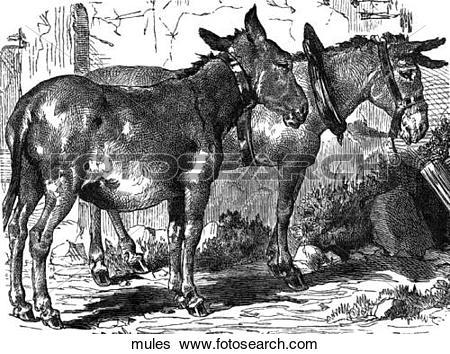Stock Illustration of Mammals.
