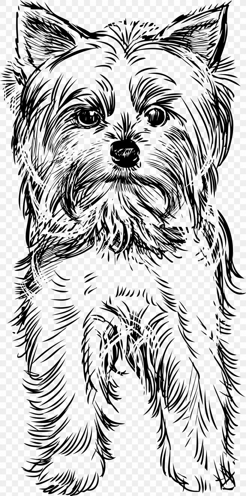 Yorkshire Terrier Puppy Drawing Clip Art, PNG, 1985x4000px.
