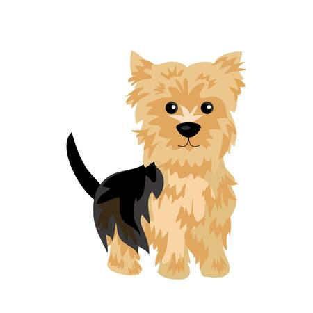 1,266 Yorkshire Terrier Stock Vector Illustration And.
