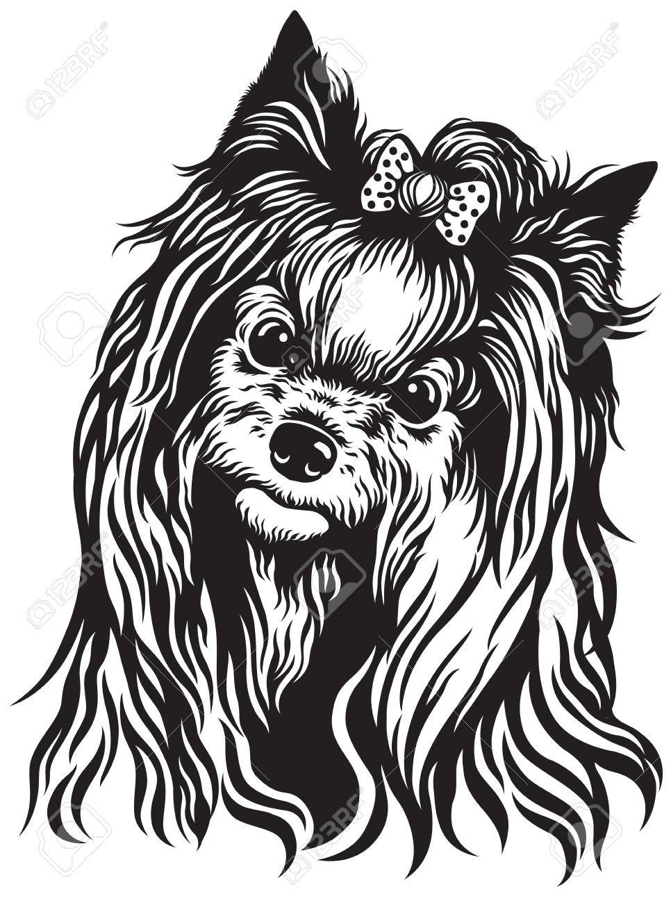 yorkshire terrier breed dog head, black and white image.