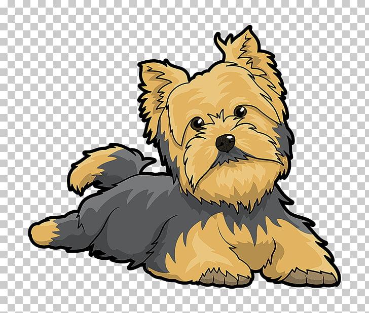Yorkshire Terrier Puppy Cairn Terrier Australian Silky.