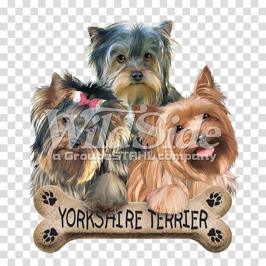 Yorkshire Terrier Australian Silky Terrier Australian.