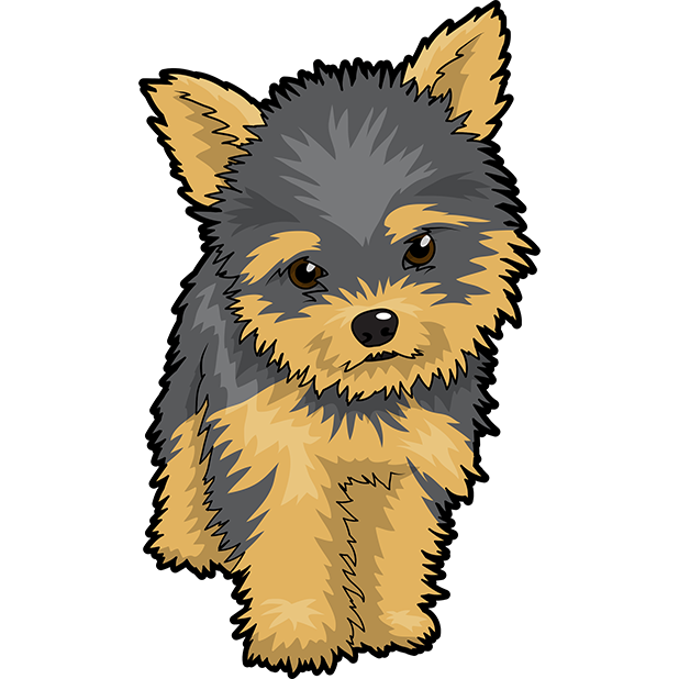Pet clipart yorkie, Pet yorkie Transparent FREE for download.