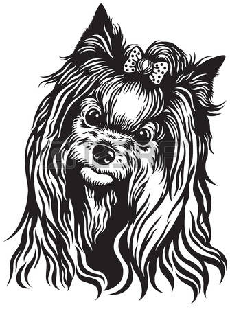 698 Yorkshire Terrier Stock Vector Illustration And Royalty Free.