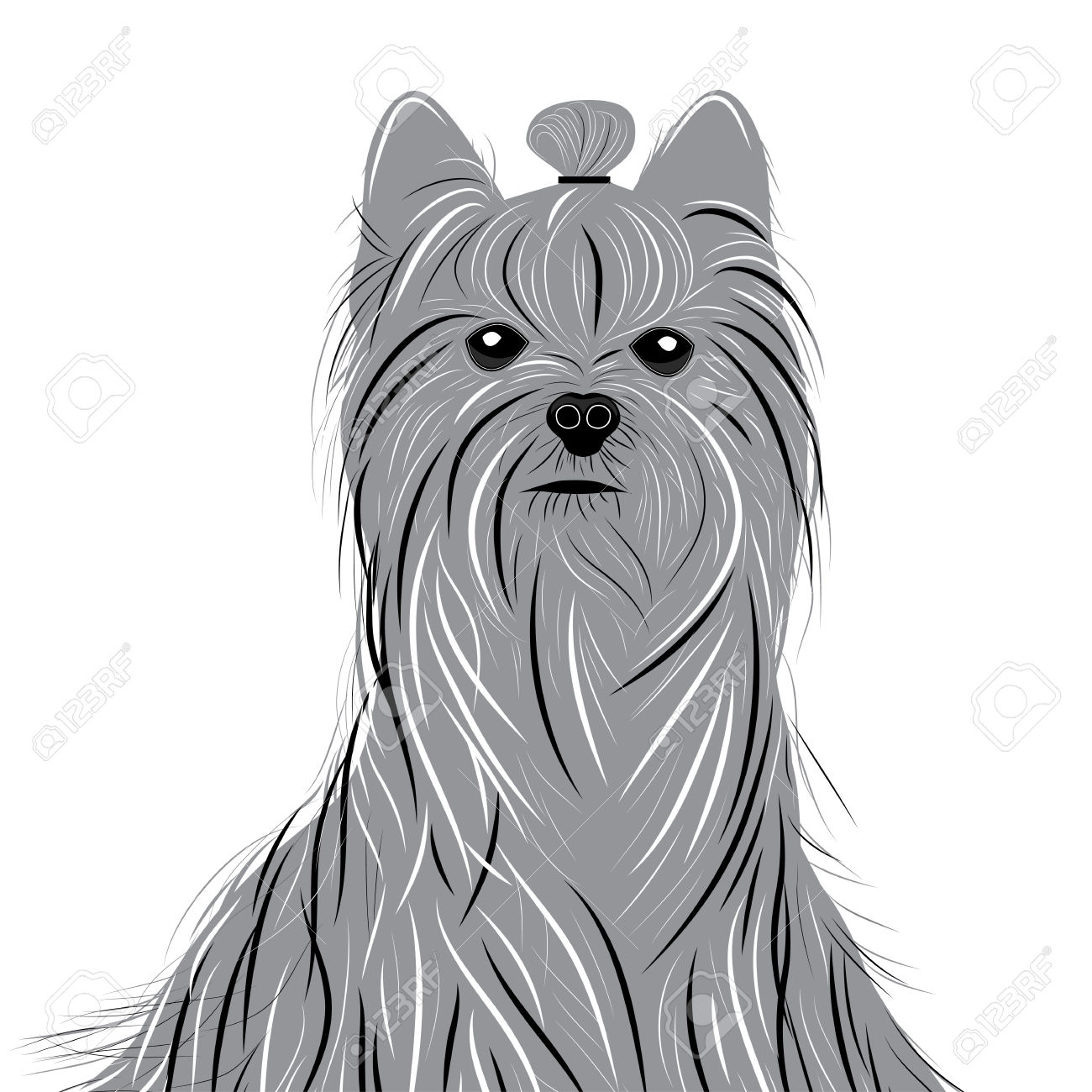 197 Yorkie Stock Illustrations, Cliparts And Royalty Free Yorkie.