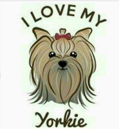 39 Best Yorkie images in 2019.