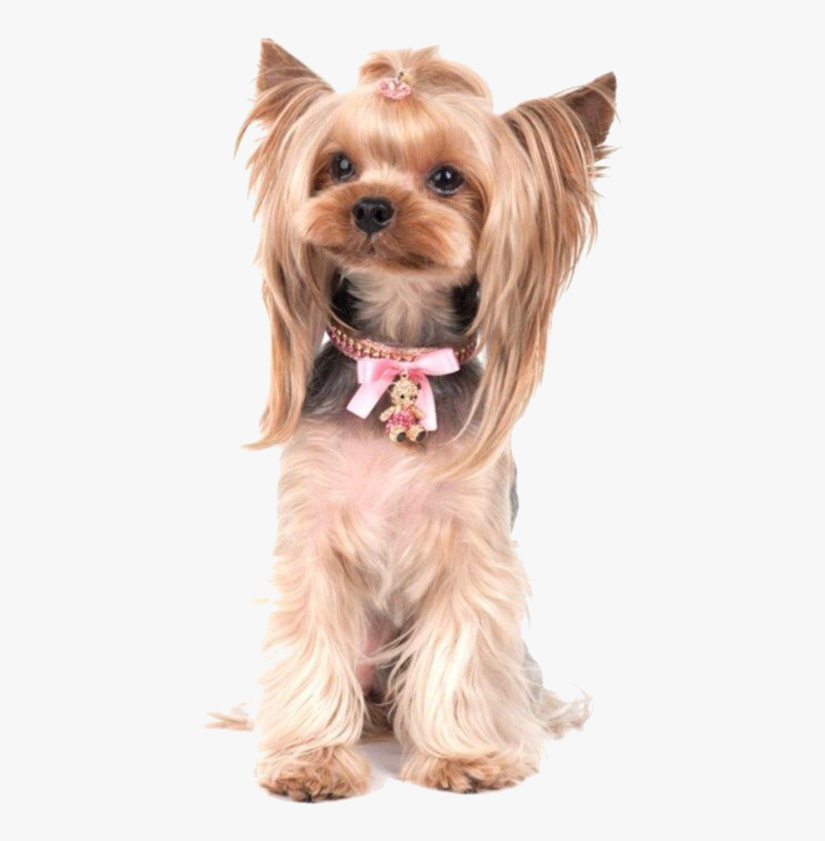 Terrier Drawing Yorkie Poo Clipart Library.