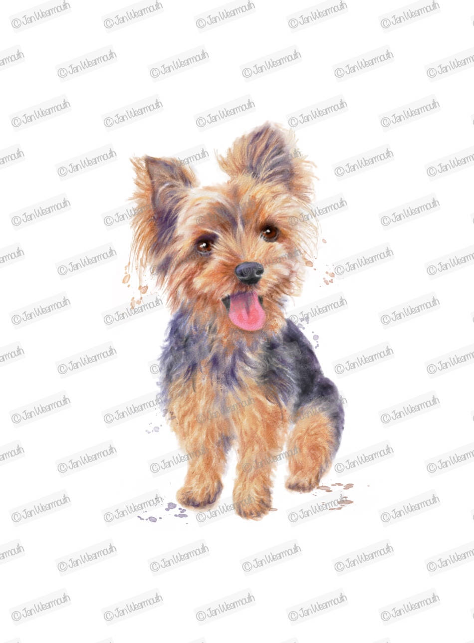 Dog clipart yorkie clipart instant download. Digital watercolor clip art  Commercial PNG Printable illustration yorkshire terrier dog.