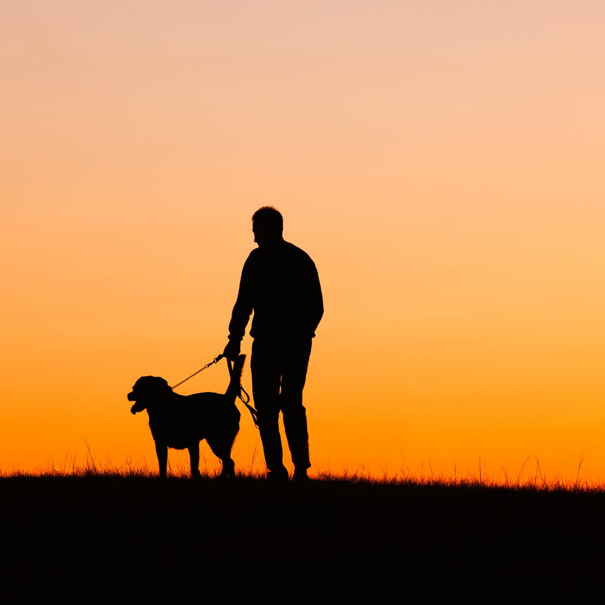 Why losing a dog can be harder than losing a relative or friend.