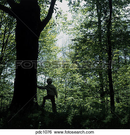 Stock Images of Silhouette of a young boy walking through the.