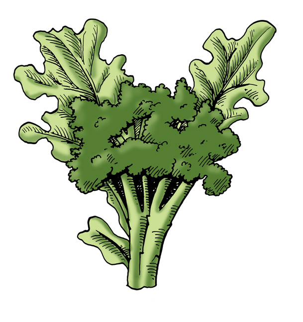 Young broccoli plants clipart clipart images gallery for.