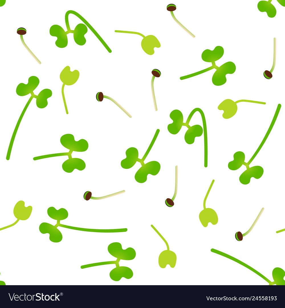 Microgreens broccoli sprouting seeds of a plant.