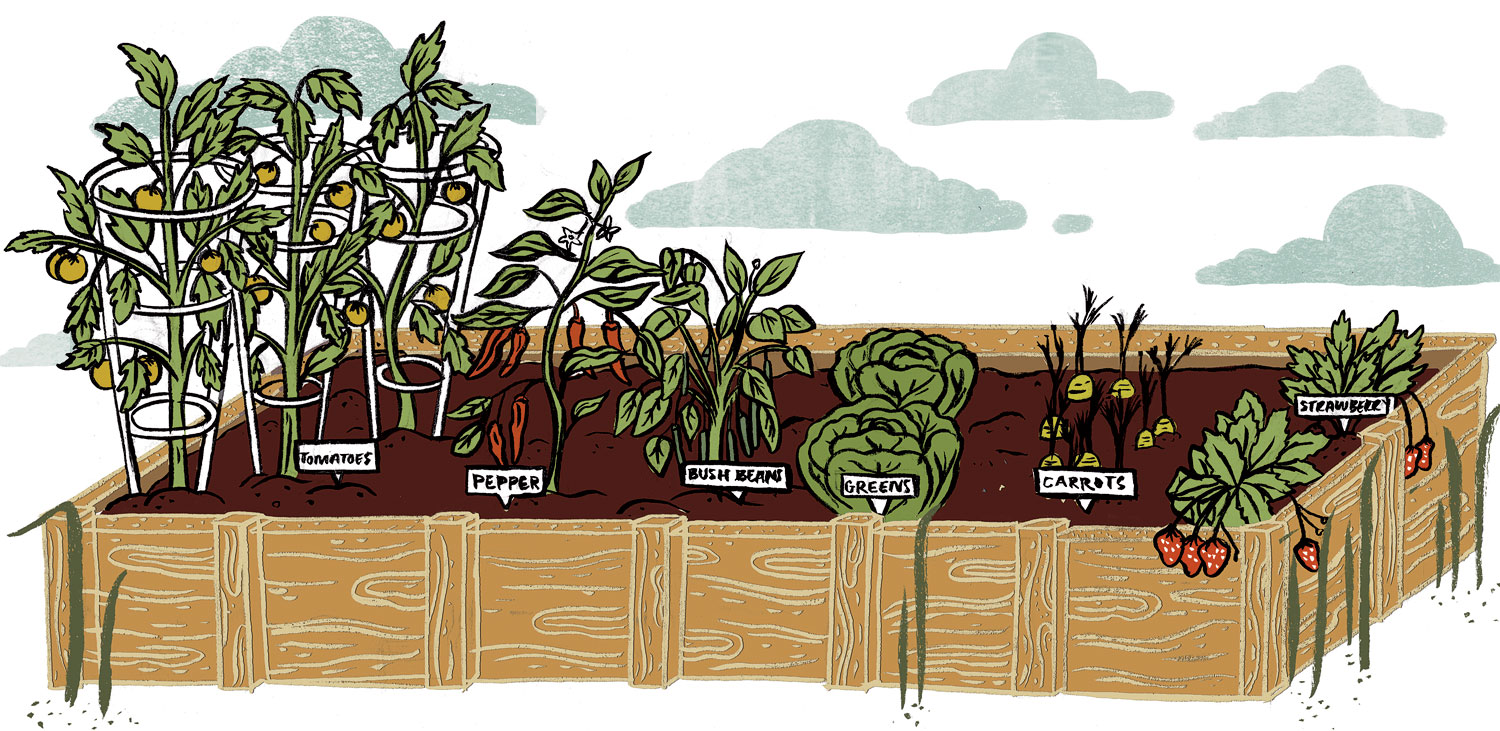 Six Things to Plant in the Ideal Starter Garden.