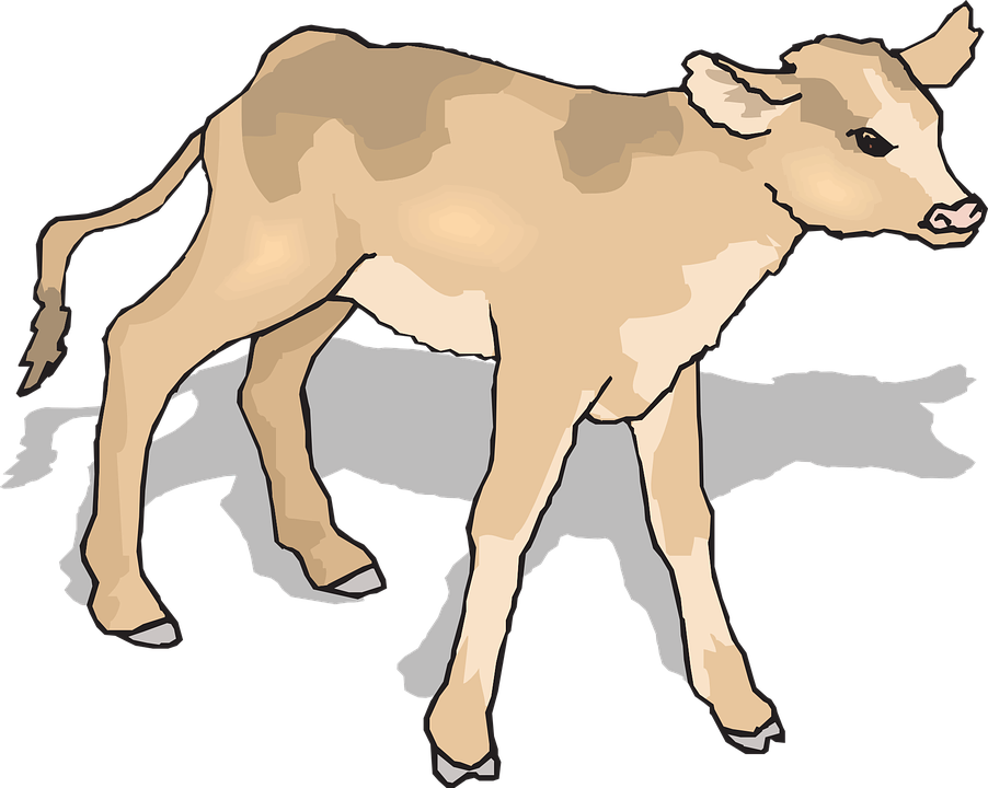 Free vector graphic: Calf, Baby, Cow, Standing, Shadow.