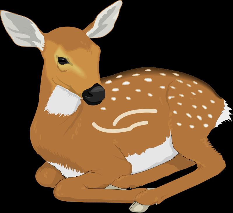 Image of Baby Deer Clipart #3549, Baby Deer Clip Art.