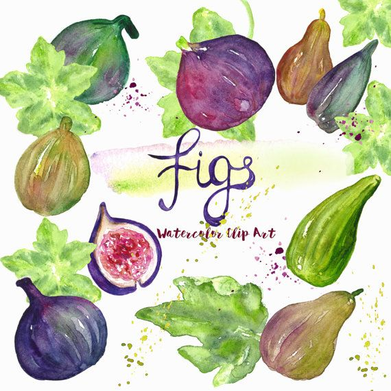 1000+ ideas about Fig Leaves on Pinterest.