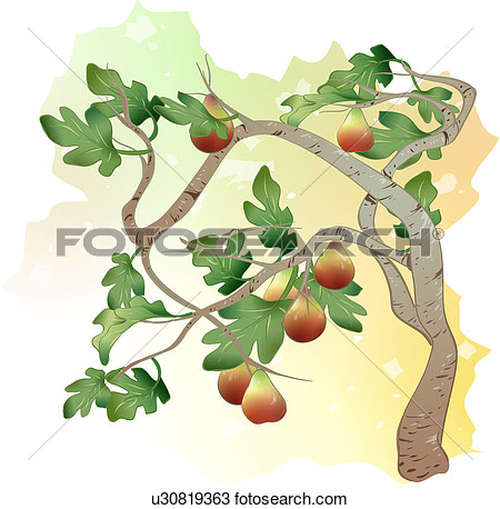 Clipart fig tree.
