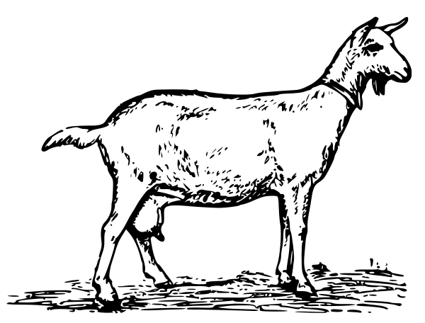Free Young Goat Clipart, 1 page of Public Domain Clip Art.