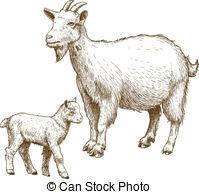 Clipart goat kid.