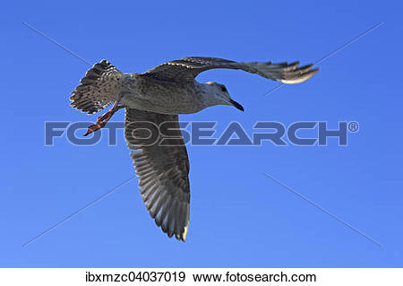 "Stock Photograph of ""Flying young Yellow."