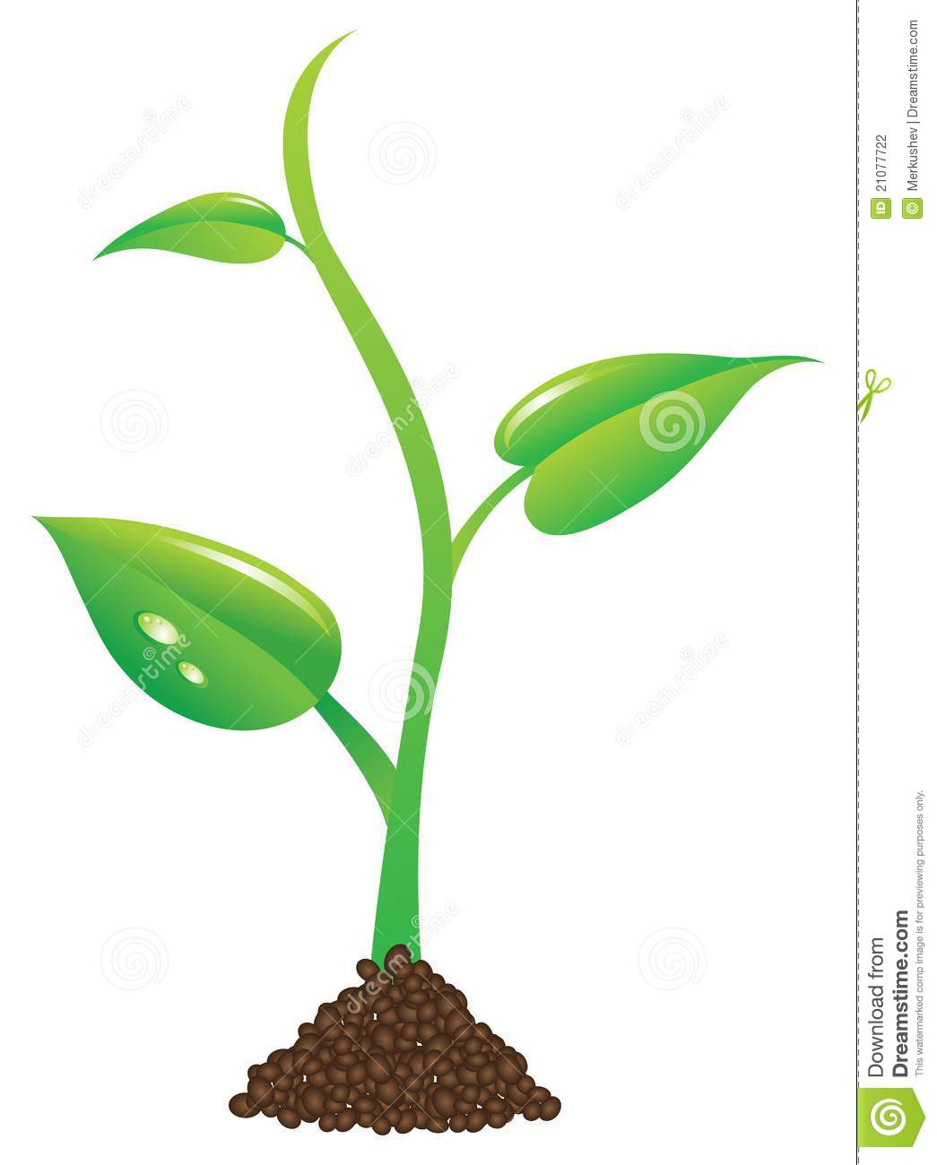 Free plant pictures clip art.
