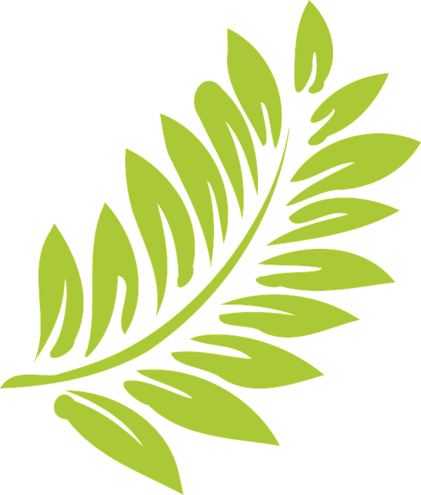 Free vector graphic: Leaf, Green, Light, Nature, Summer.