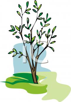 Young Tree Clip Art.