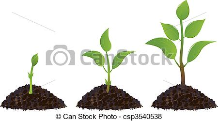 Vector of Green Young Plants.