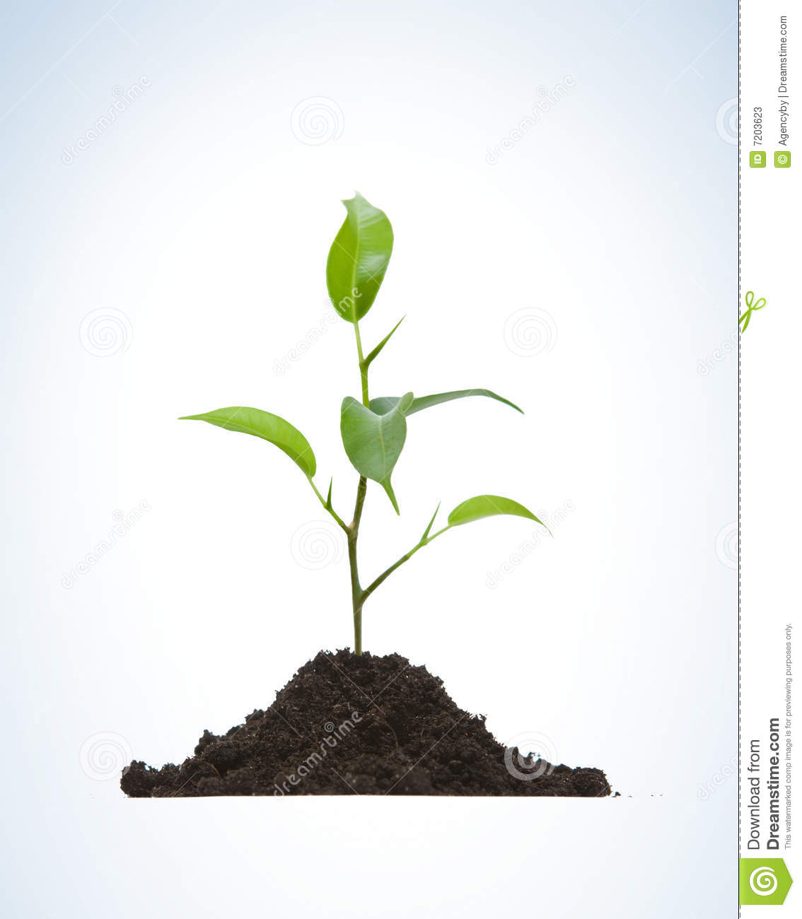 Cultivation Of A Young Plant Stock Photos.
